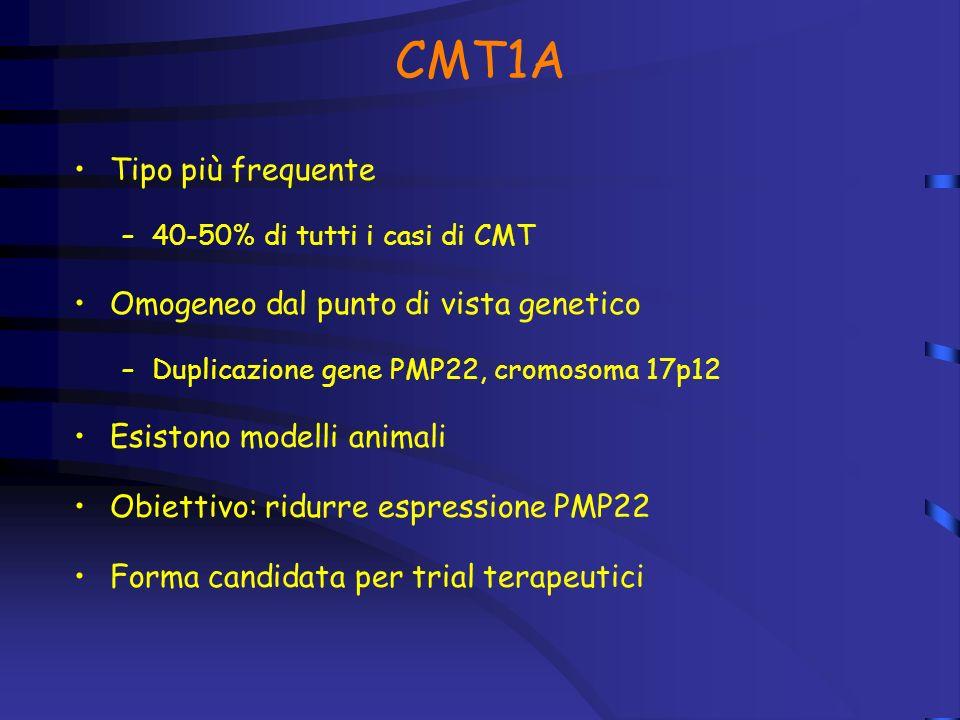 CMT1A Tipo più frequente Omogeneo dal punto di vista genetico
