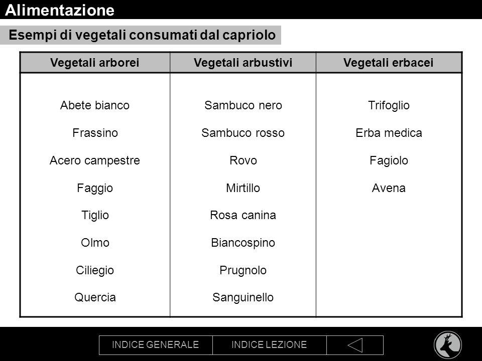Alimentazione Esempi di vegetali consumati dal capriolo
