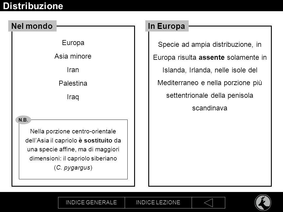 Distribuzione Nel mondo In Europa Europa Asia minore Iran Palestina