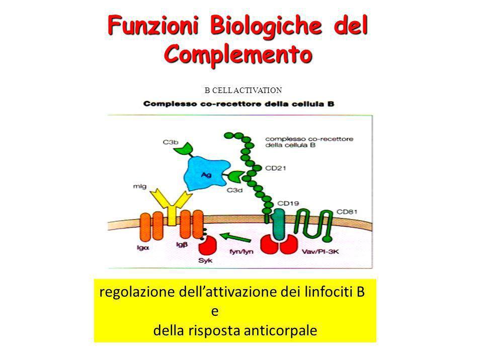 Funzioni Biologiche del