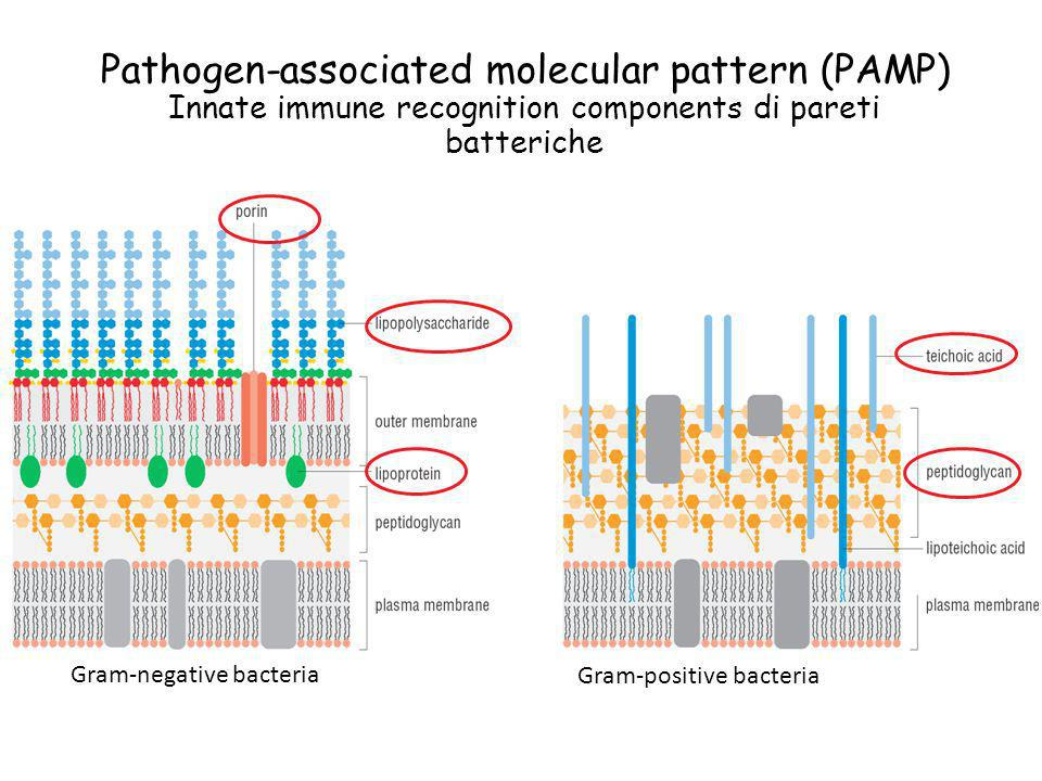 Pathogen-associated molecular pattern (PAMP)