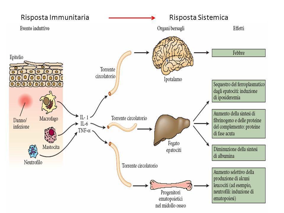 Risposta Immunitaria Risposta Sistemica