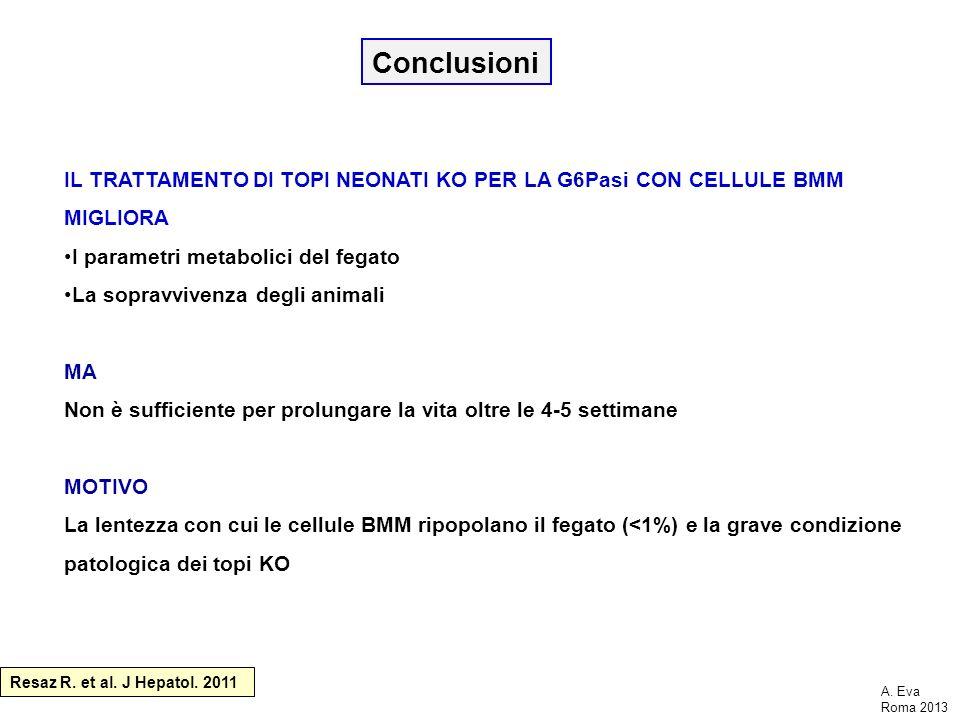 Conclusioni IL TRATTAMENTO DI TOPI NEONATI KO PER LA G6Pasi CON CELLULE BMM MIGLIORA. I parametri metabolici del fegato.