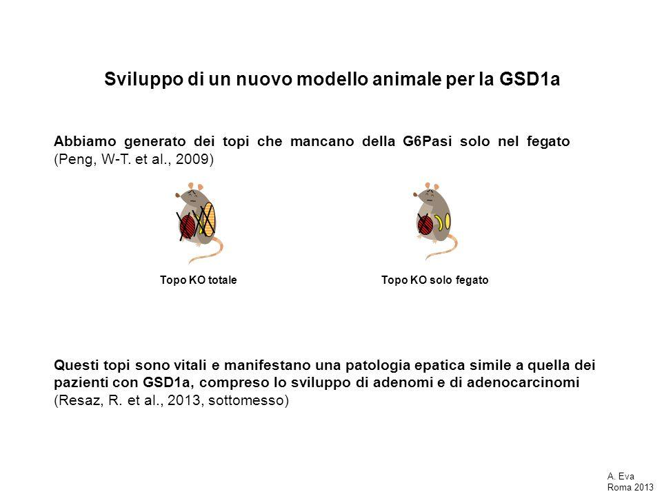 Sviluppo di un nuovo modello animale per la GSD1a