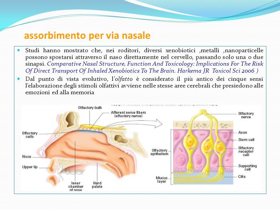 assorbimento per via nasale