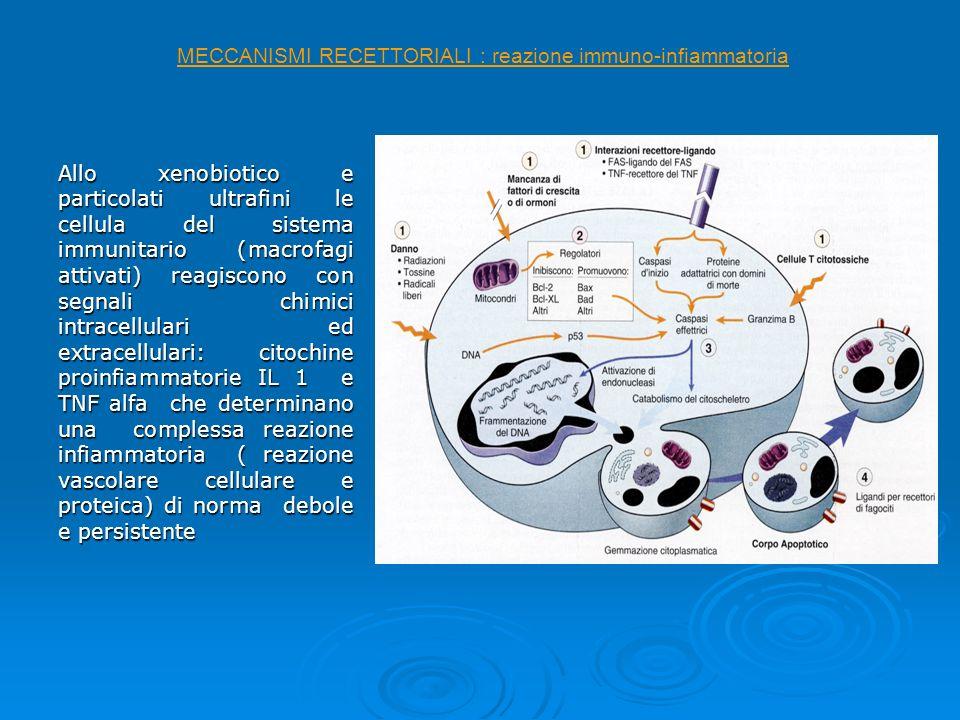 MECCANISMI RECETTORIALI : reazione immuno-infiammatoria