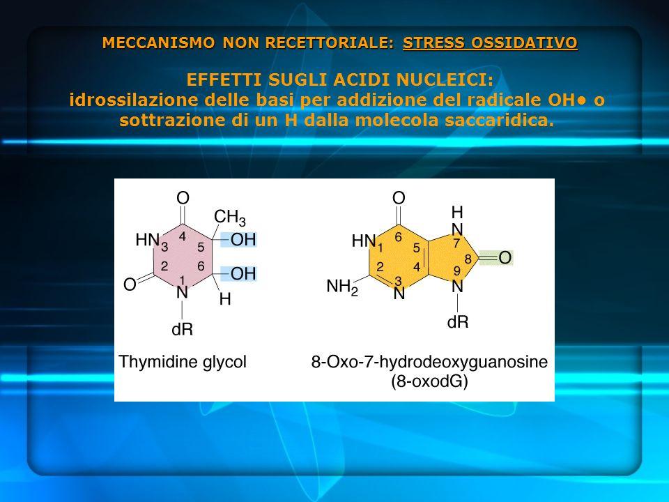 MECCANISMO NON RECETTORIALE: STRESS OSSIDATIVO EFFETTI SUGLI ACIDI NUCLEICI: idrossilazione delle basi per addizione del radicale OH• o sottrazione di un H dalla molecola saccaridica.