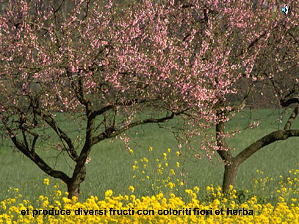 et produce diversi fructi con coloriti fiori et herba