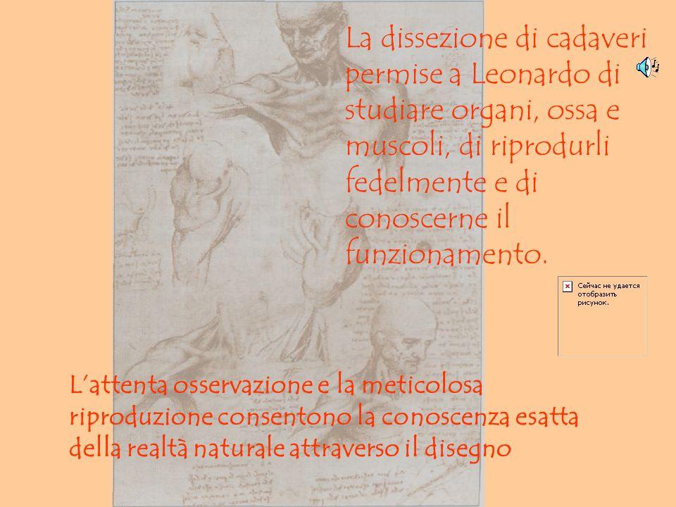 La dissezione di cadaveri permise a Leonardo di studiare organi, ossa e muscoli, di riprodurli fedelmente e di conoscerne il funzionamento.