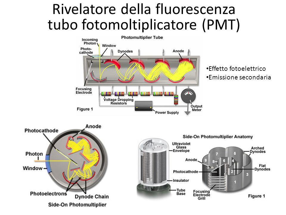 Rivelatore della fluorescenza tubo fotomoltiplicatore (PMT)