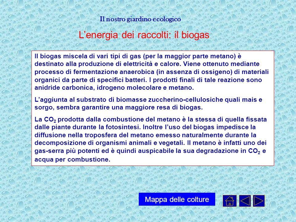 L'energia dei raccolti: il biogas
