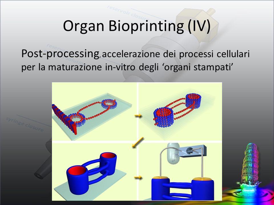 Organ Bioprinting (IV)
