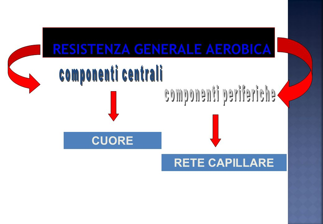 Resistenza generale aerobica