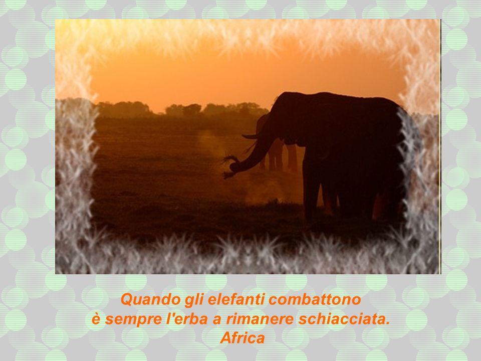 Quando gli elefanti combattono è sempre l erba a rimanere schiacciata.