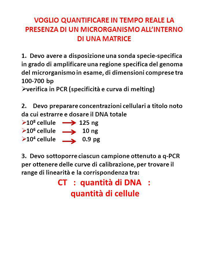 CT : quantità di DNA : quantità di cellule