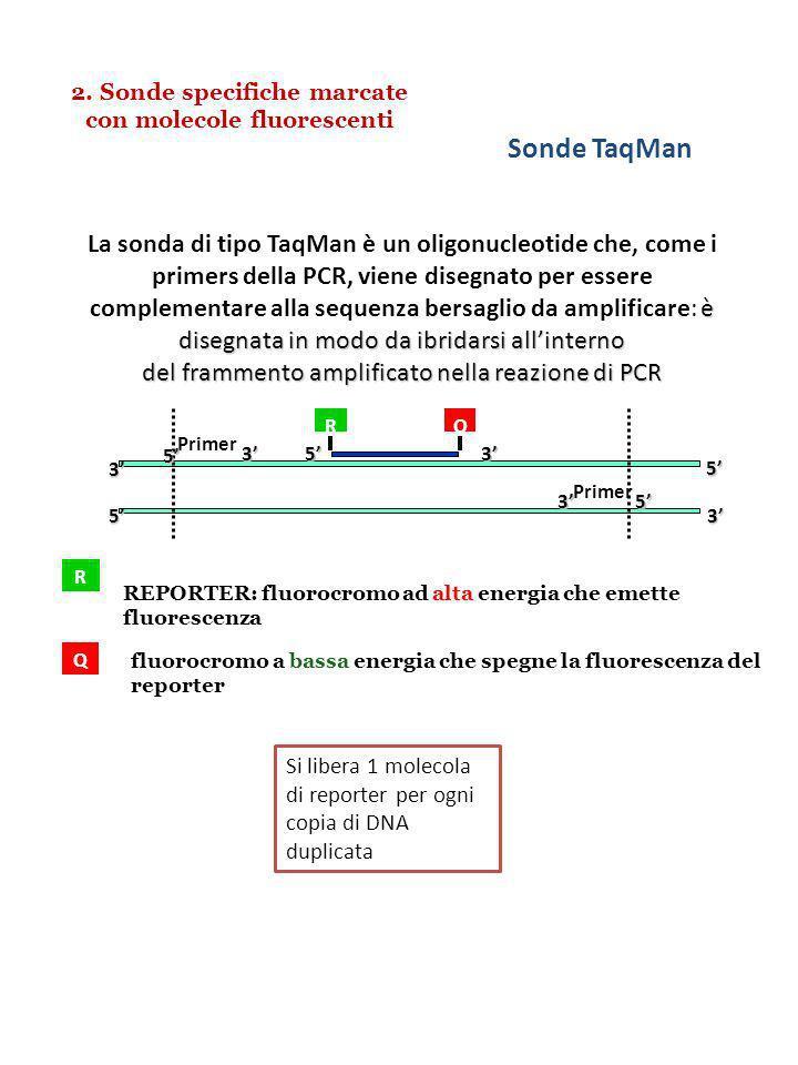 2. Sonde specifiche marcate con molecole fluorescenti