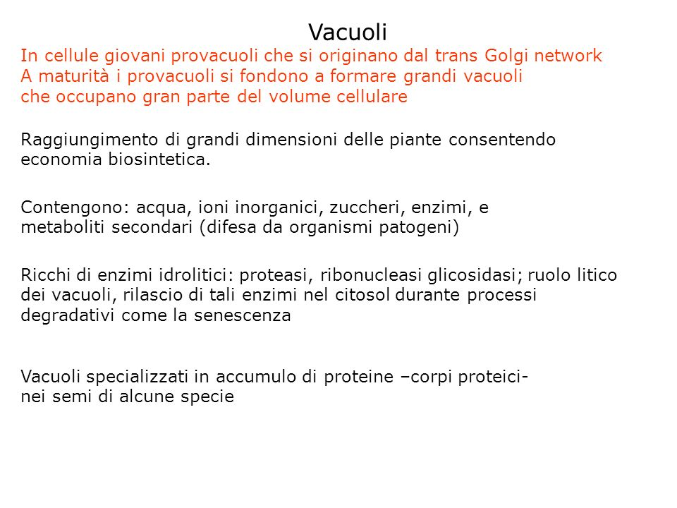 Vacuoli In cellule giovani provacuoli che si originano dal trans Golgi network. A maturità i provacuoli si fondono a formare grandi vacuoli.