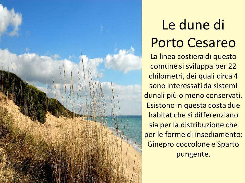 Le dune di Porto Cesareo La linea costiera di questo comune si sviluppa per 22 chilometri, dei quali circa 4 sono interessati da sistemi dunali più o meno conservati.
