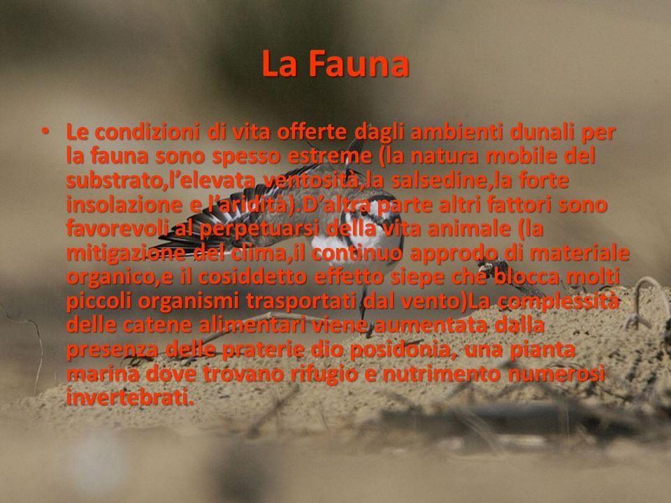 La Fauna