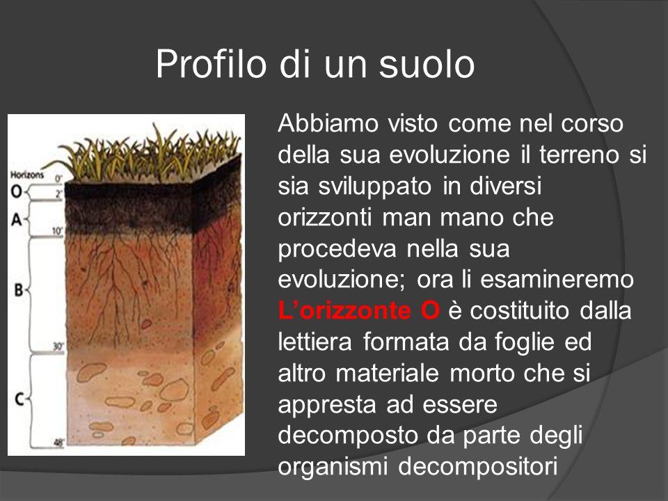 Profilo di un suolo
