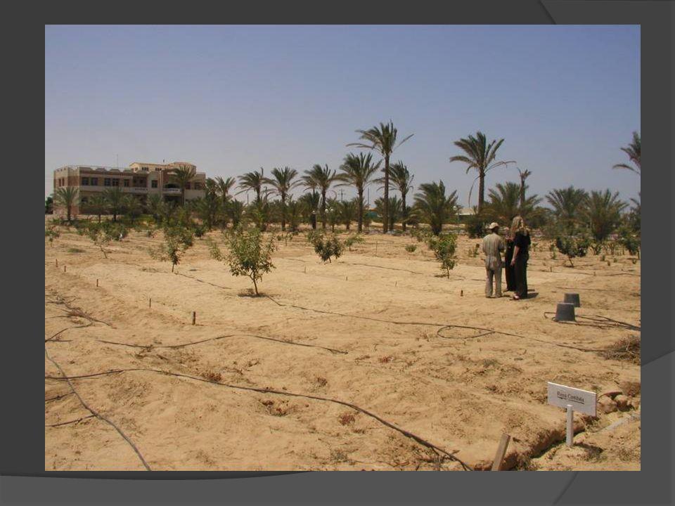 Terreno sabbioso Un terreno si dice sabbioso se la percentuale di sabbia supera il 65% Si tratta di un terreno molto permeabile e ricco di aria.