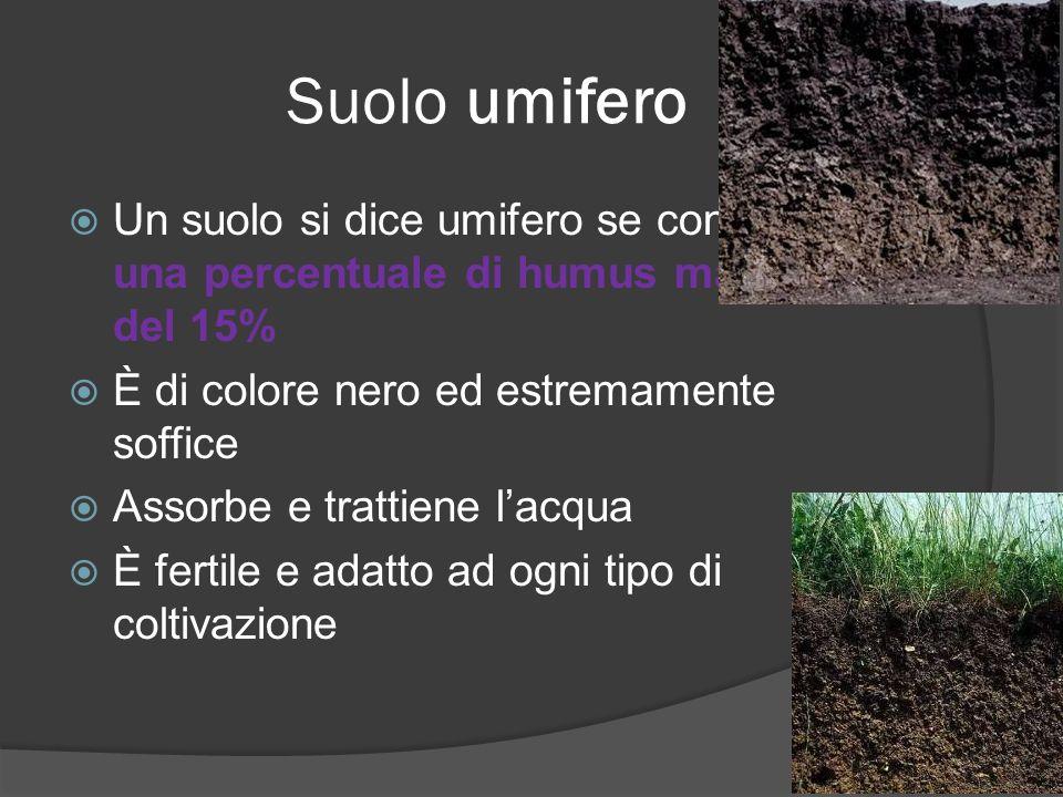 Suolo umifero Un suolo si dice umifero se contiene una percentuale di humus maggiore del 15% È di colore nero ed estremamente soffice.