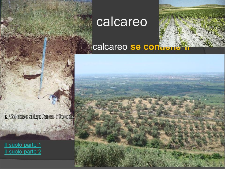 Suolo calcareo Un suolo si dice calcareo se contiene il una percentuale > 20% di calcare.