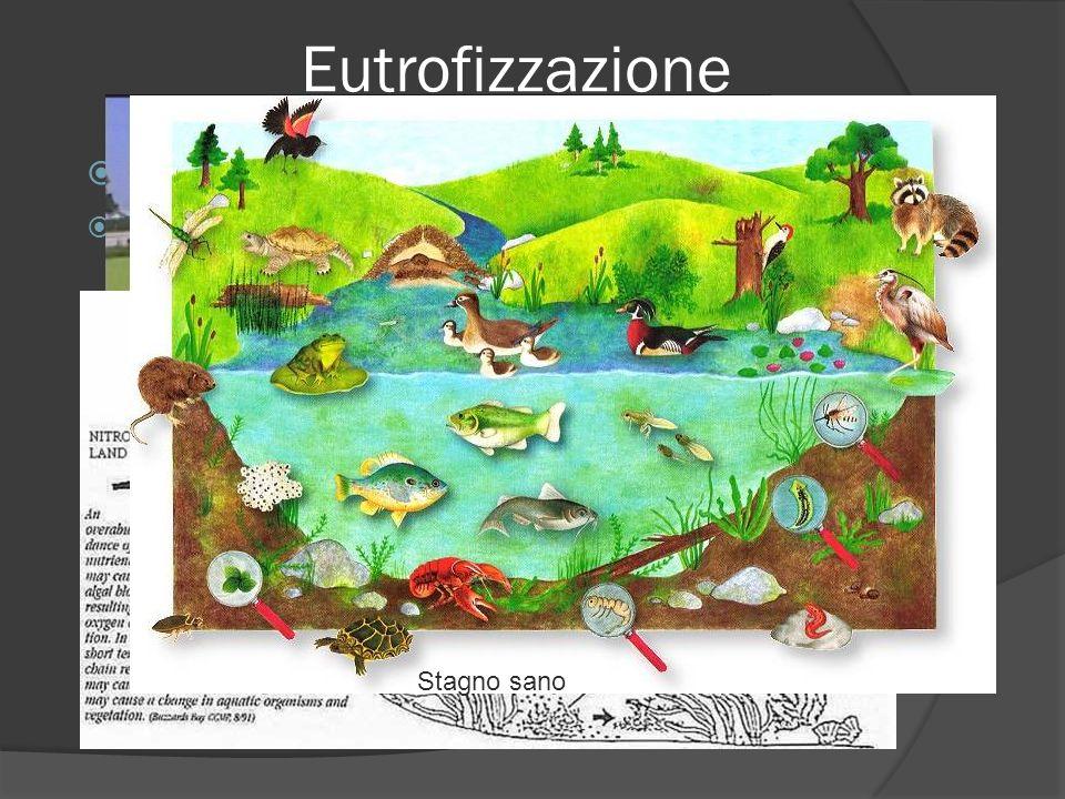 Eutrofizzazione Il prefisso eu – sta per buono