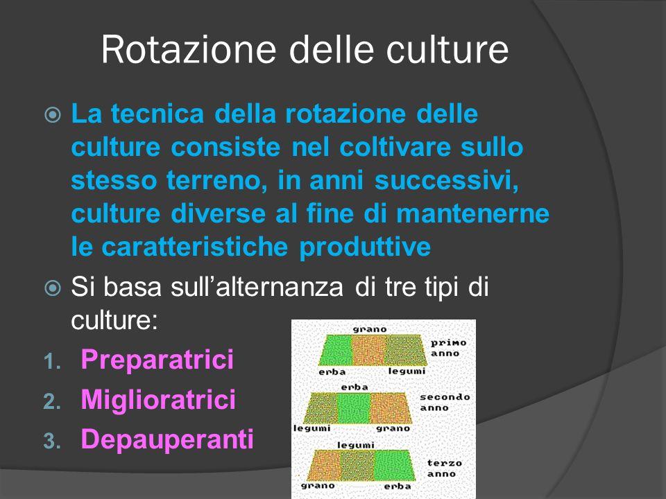 Rotazione delle culture
