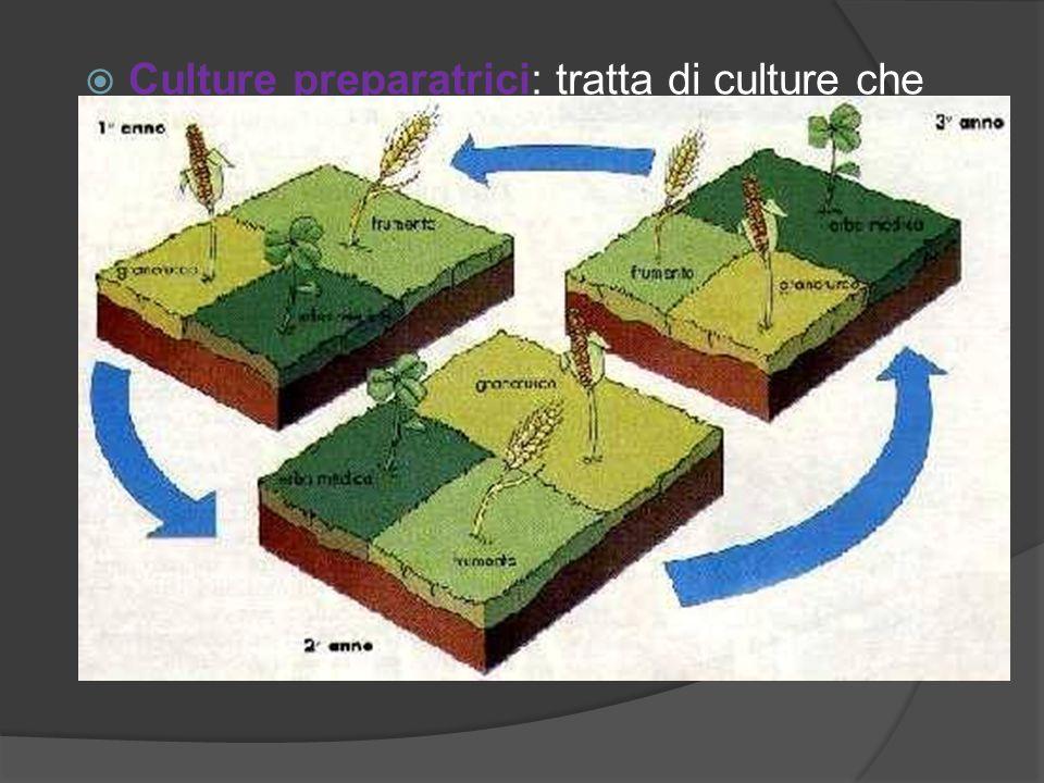 Culture preparatrici: tratta di culture che lasciano il terreno in condizioni migliori di quelle preesistenti come patata, mais, pomodoro