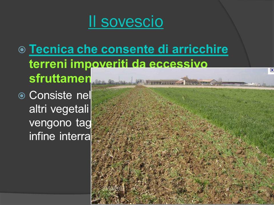 Il sovescio Tecnica che consente di arricchire terreni impoveriti da eccessivo sfruttamento.