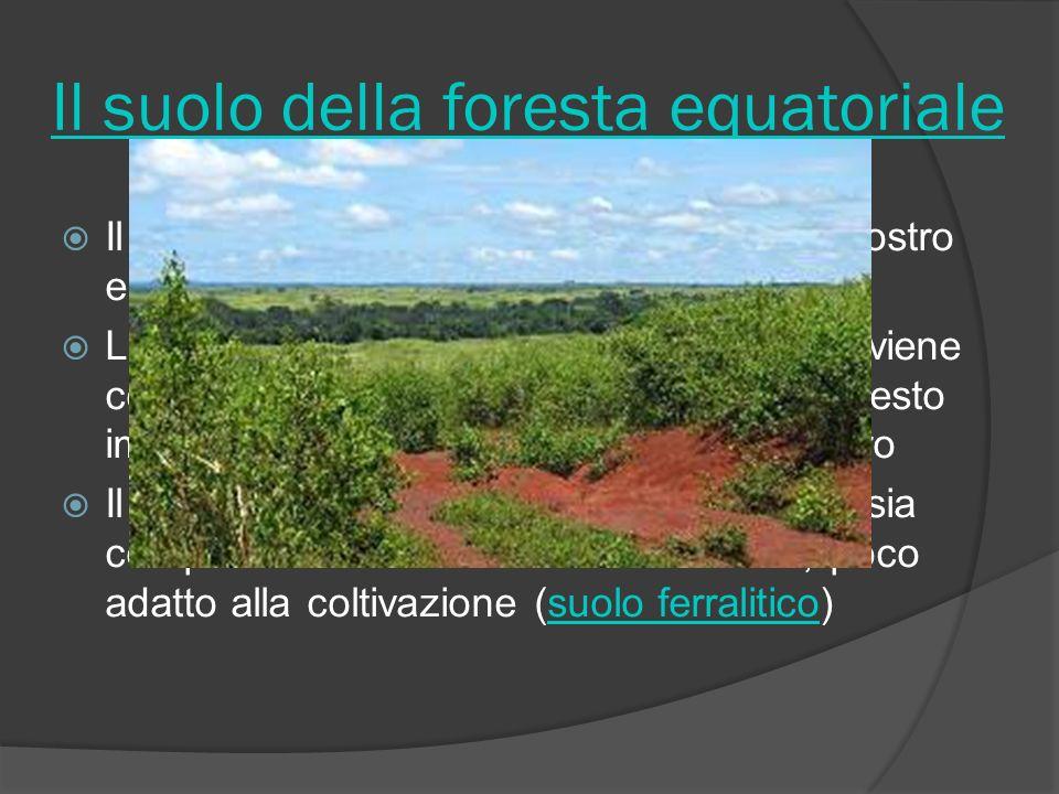 Il suolo della foresta equatoriale