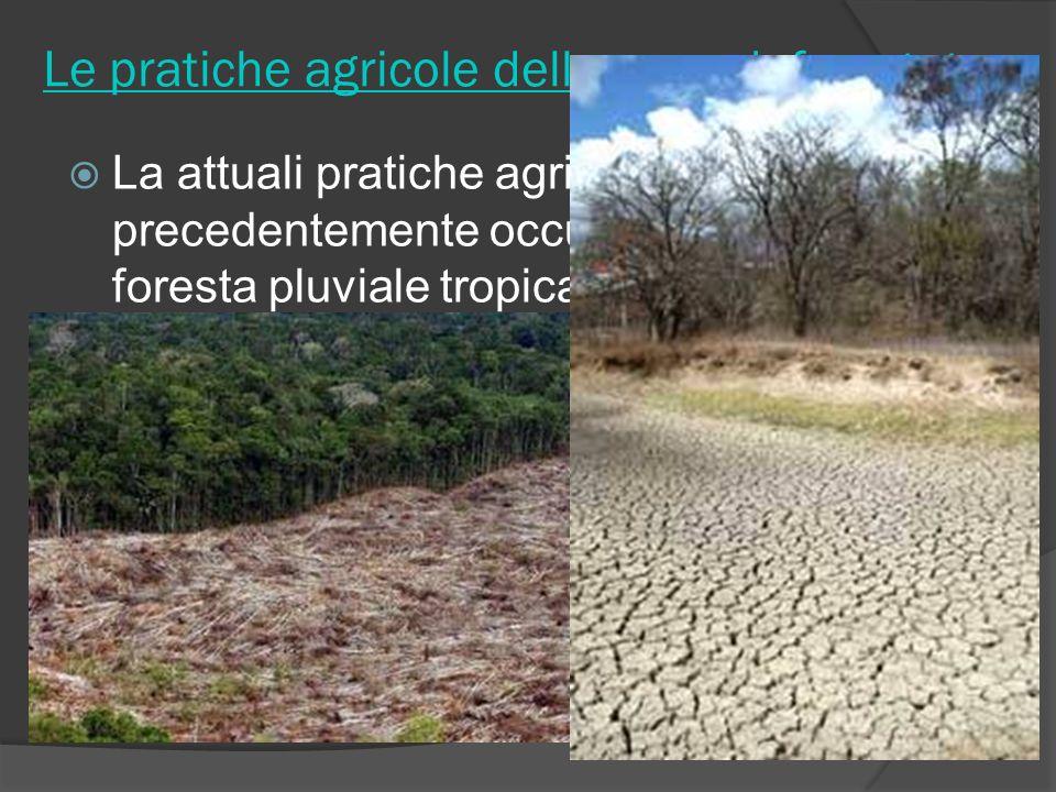 Le pratiche agricole delle zone deforestate