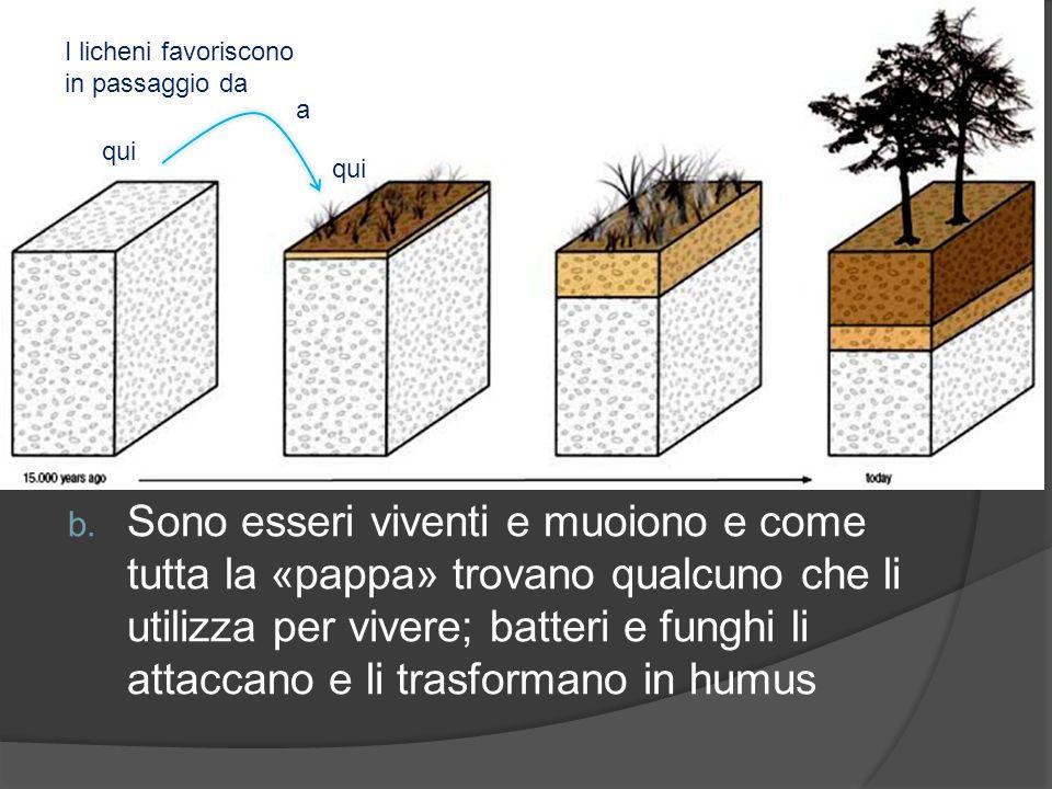 Il ruolo dei licheni è duplice: