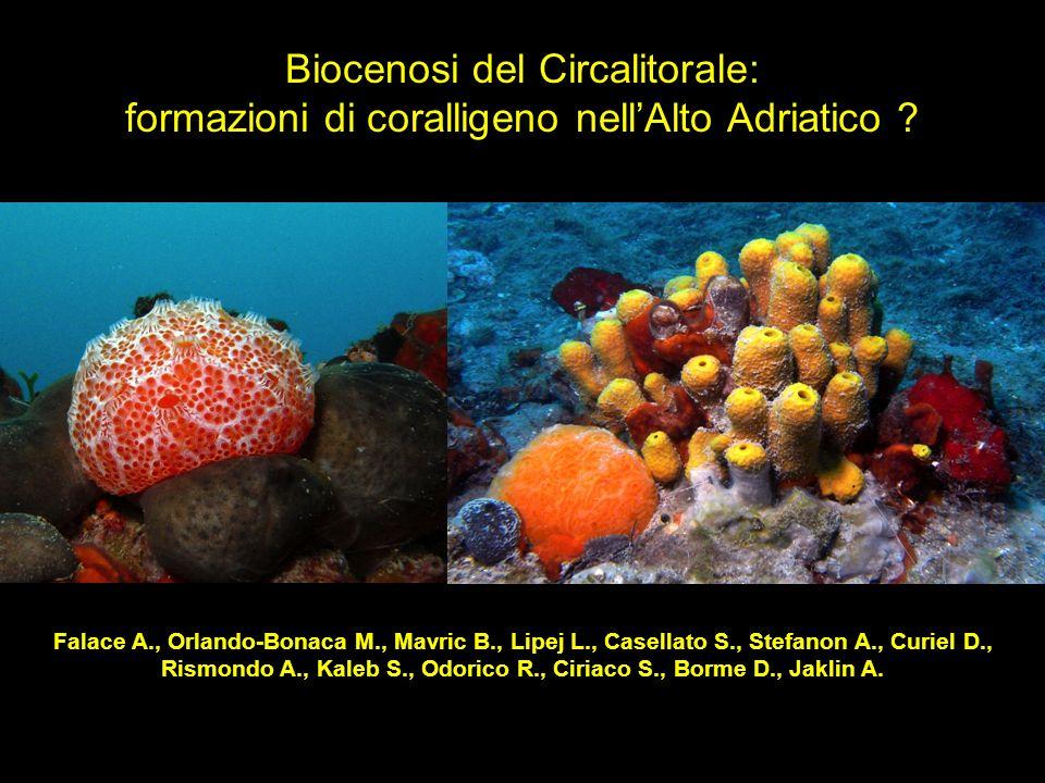 Biocenosi del Circalitorale: