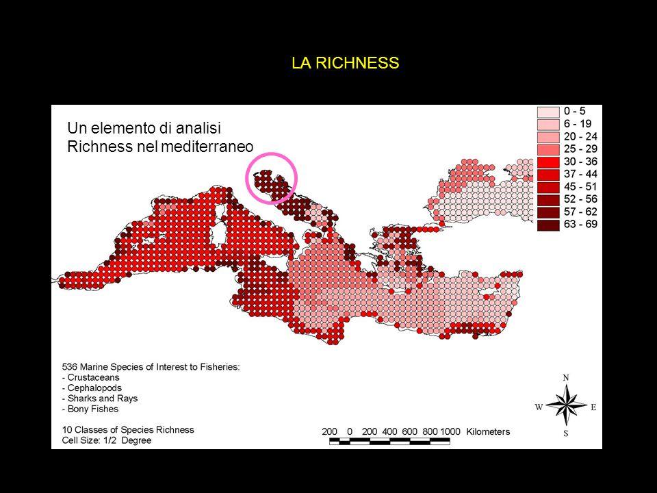 LA RICHNESS Un elemento di analisi Richness nel mediterraneo