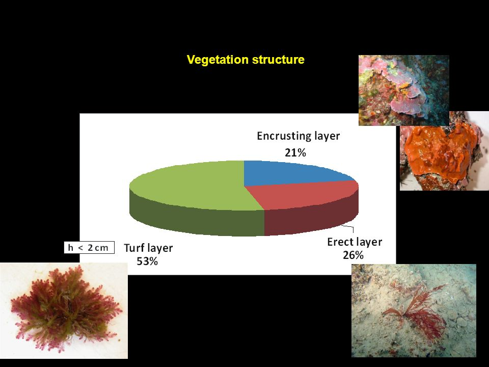Vegetation structure 9