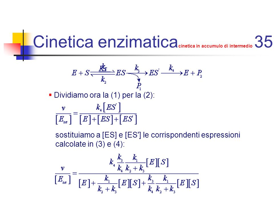 Cinetica enzimaticacinetica in accumulo di intermedio 35