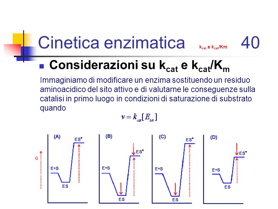 Cinetica enzimatica kcat e kcat/Km 40