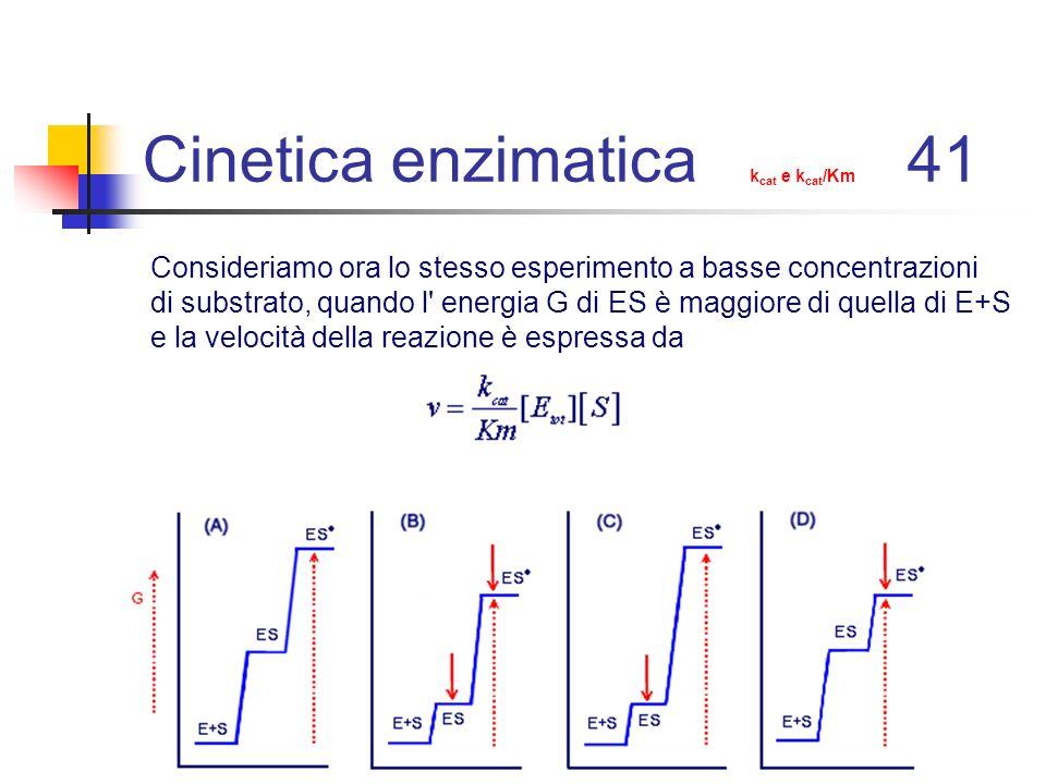 Cinetica enzimatica kcat e kcat/Km 41