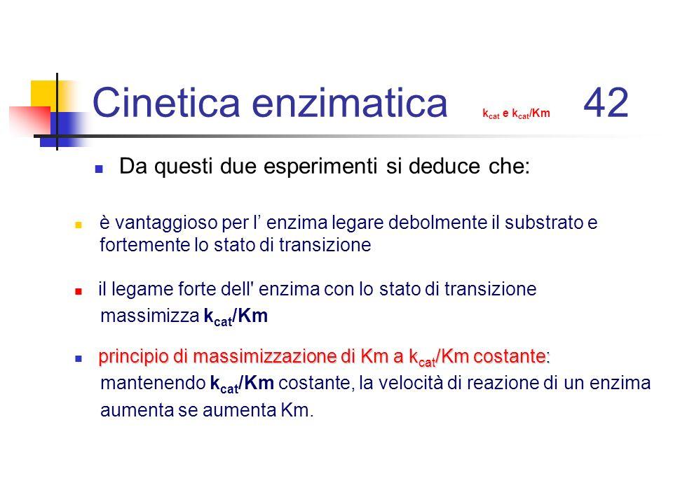 Cinetica enzimatica kcat e kcat/Km 42