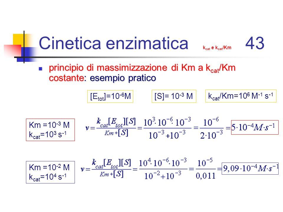 Cinetica enzimatica kcat e kcat/Km 43