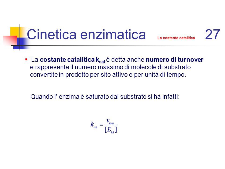 Cinetica enzimatica La costante catalitica 27
