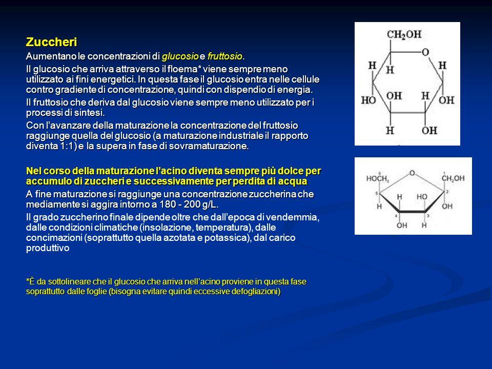 Zuccheri Aumentano le concentrazioni di glucosio e fruttosio.