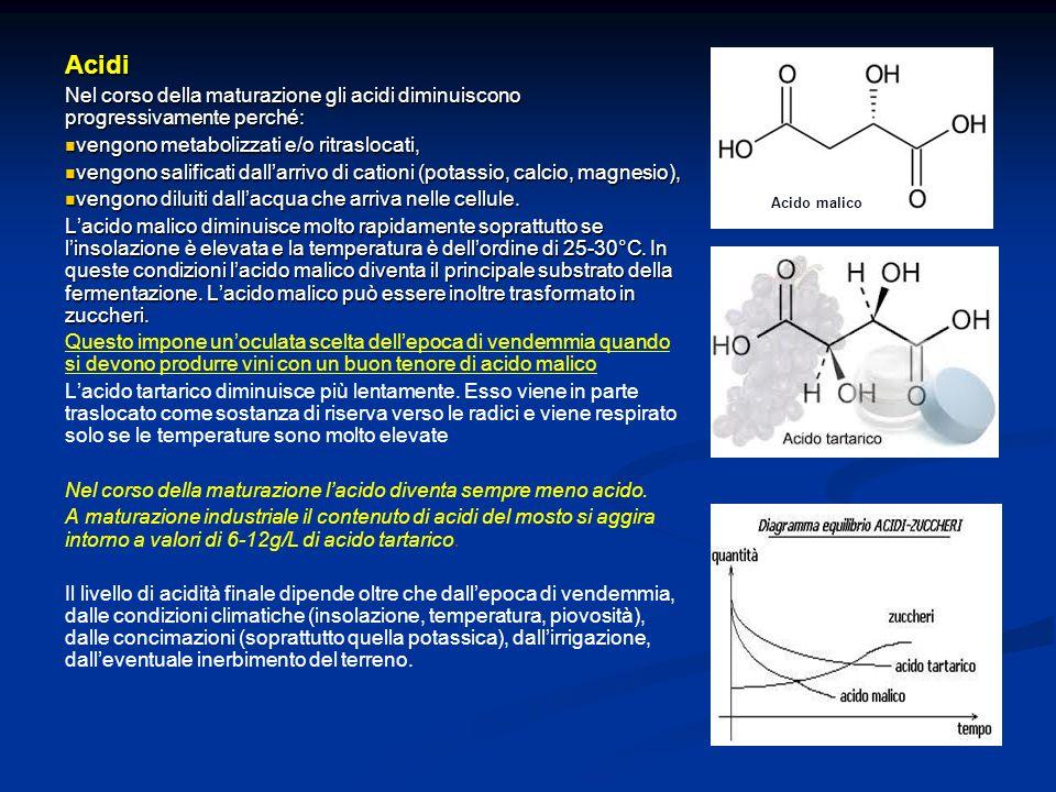 Acidi Nel corso della maturazione gli acidi diminuiscono progressivamente perché: vengono metabolizzati e/o ritraslocati,