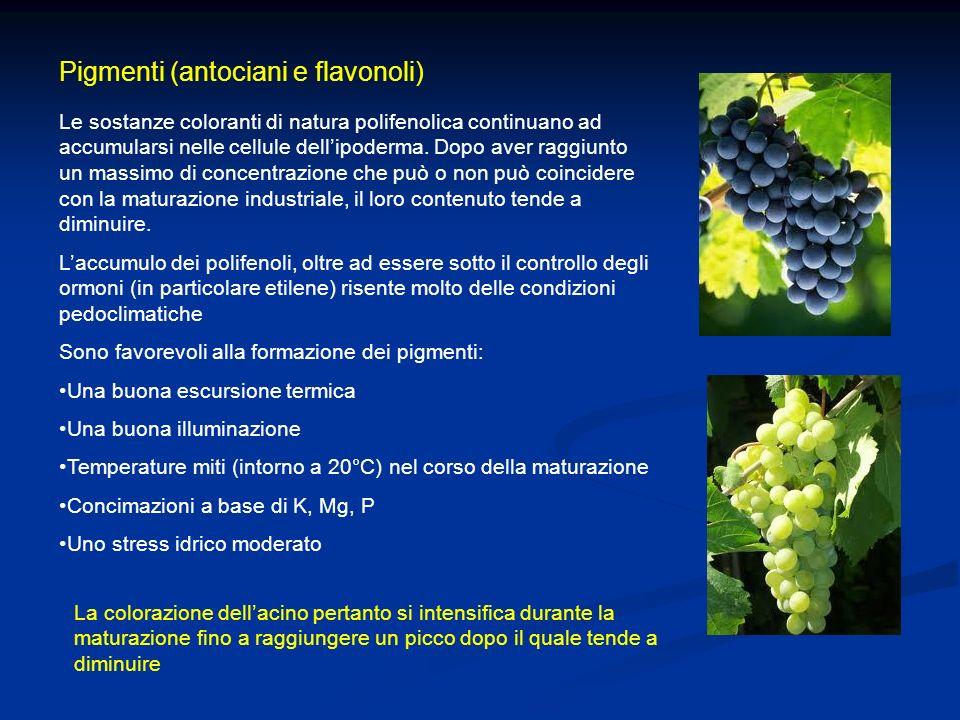 Pigmenti (antociani e flavonoli)