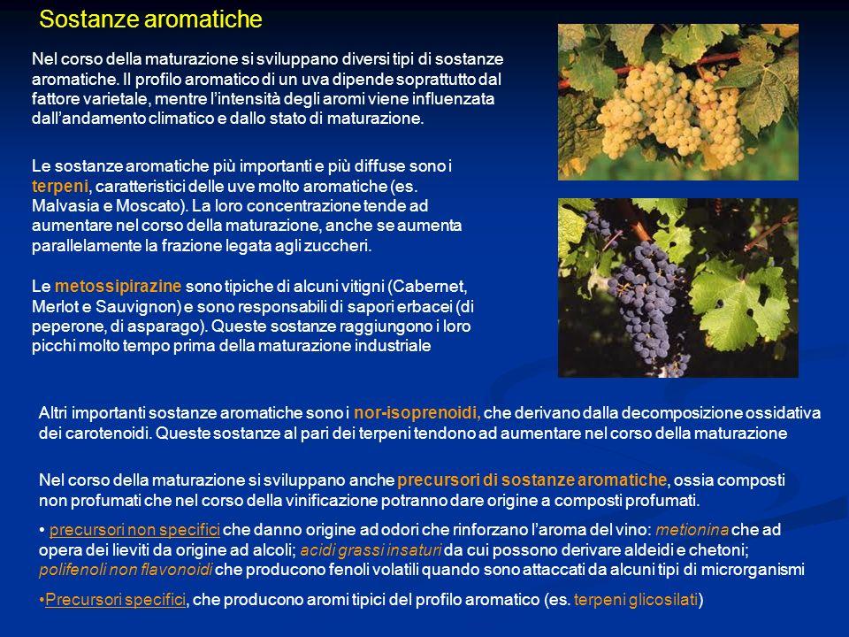 Sostanze aromatiche