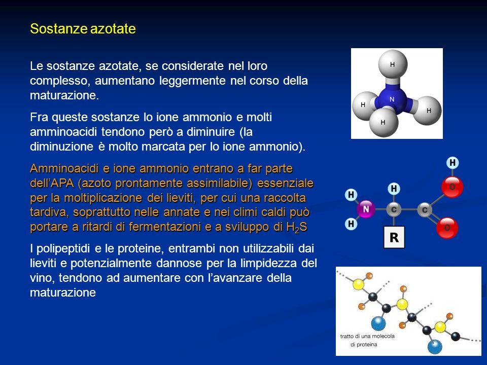 Sostanze azotate Le sostanze azotate, se considerate nel loro complesso, aumentano leggermente nel corso della maturazione.