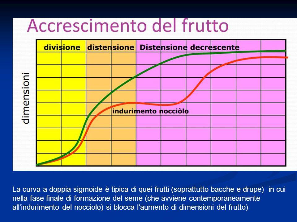 La curva a doppia sigmoide è tipica di quei frutti (soprattutto bacche e drupe) in cui nella fase finale di formazione del seme (che avviene contemporaneamente all'indurimento del nocciolo) si blocca l'aumento di dimensioni del frutto)