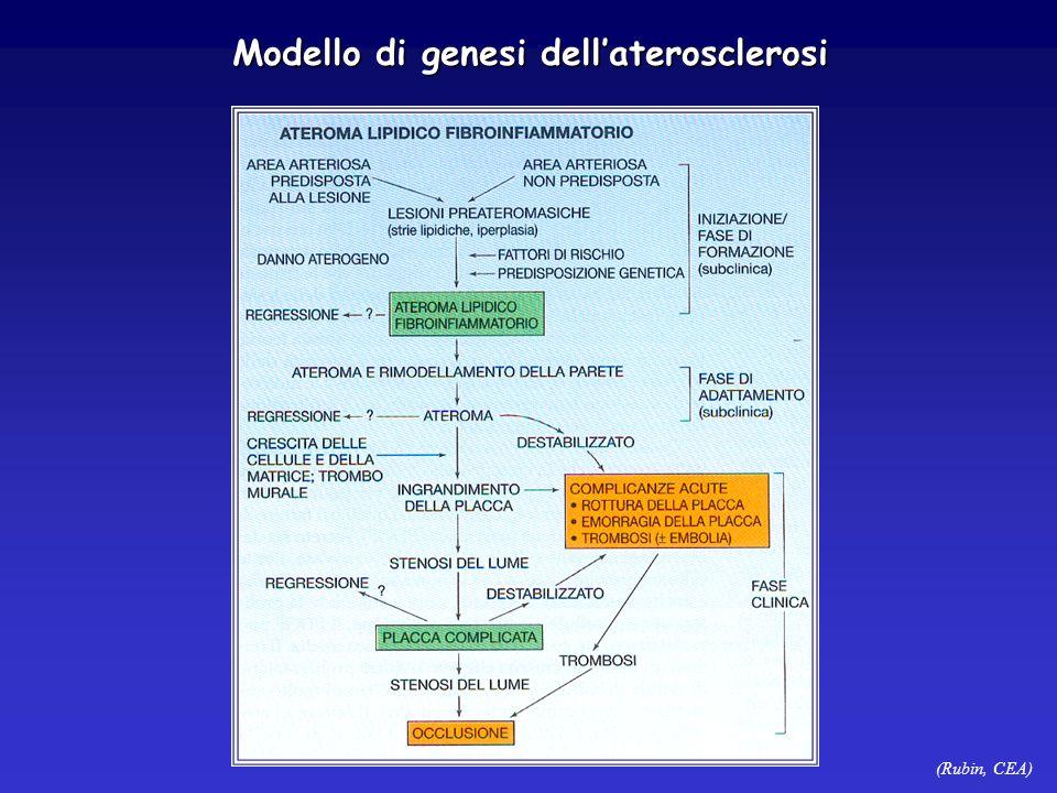Modello di genesi dell'aterosclerosi